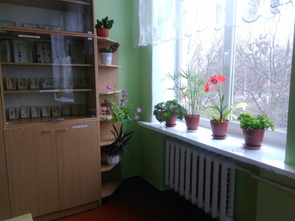 IMG 20161123 134148 1024x768 Конкурс огляд на найкраще озеленення класних кімнат