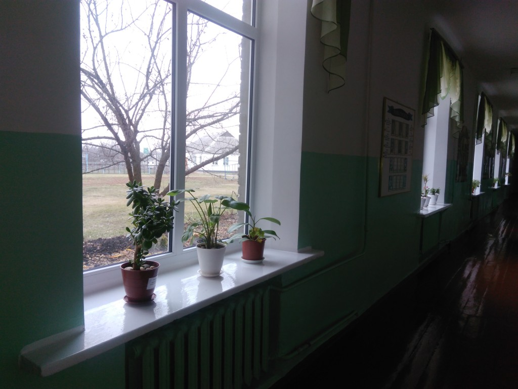 IMG 20161123 134626 1024x768 Конкурс огляд на найкраще озеленення класних кімнат