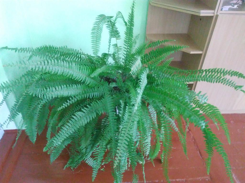 IMG 20170925 152327 1024x768 Щорічний конкурс озеленення школи