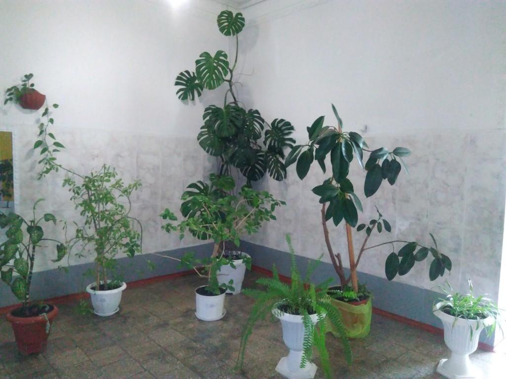 IMG 20170925 153621 1024x768 Щорічний конкурс озеленення школи