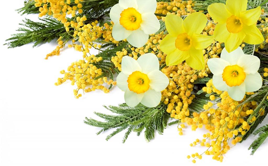 daffodils mimosa white 502427 1024x637 Заплановані заходи на 04.03 07.03.2019